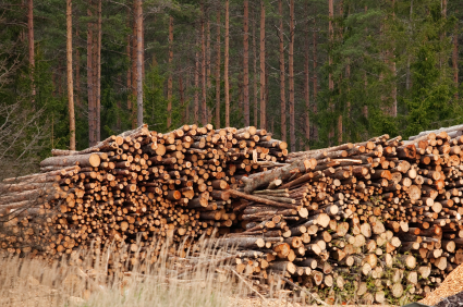 Construction Industry Comes Out Top For Timber Sustainability